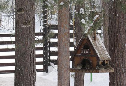 Поможем птицам пережить зиму