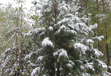 Зима пришла нежданно!
